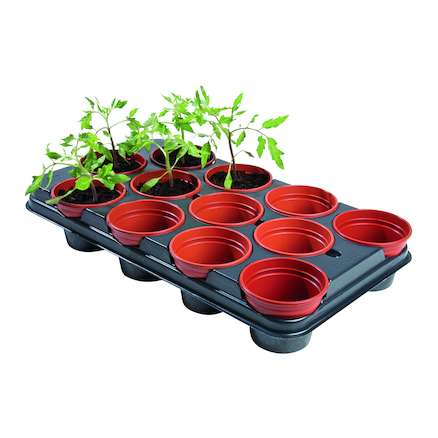 Plant Growing Pot  large