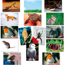 Animal Food Chains Photopacks A4 14pk  medium