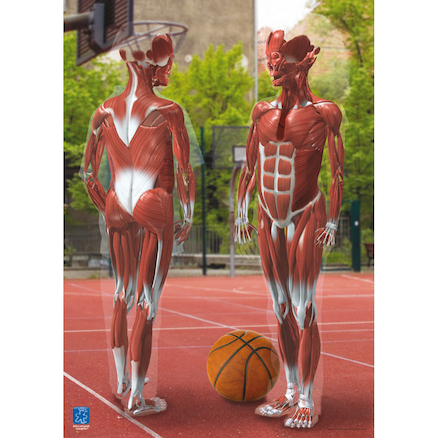 3D Human Body Posters 4pk  large