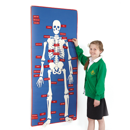 Child Size Fabric Skeleton Wall Hanging  large