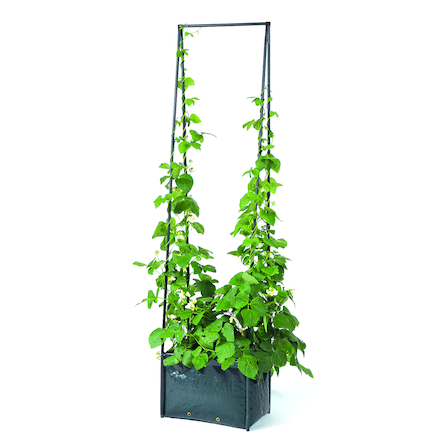 Pea and Bean Planter  large