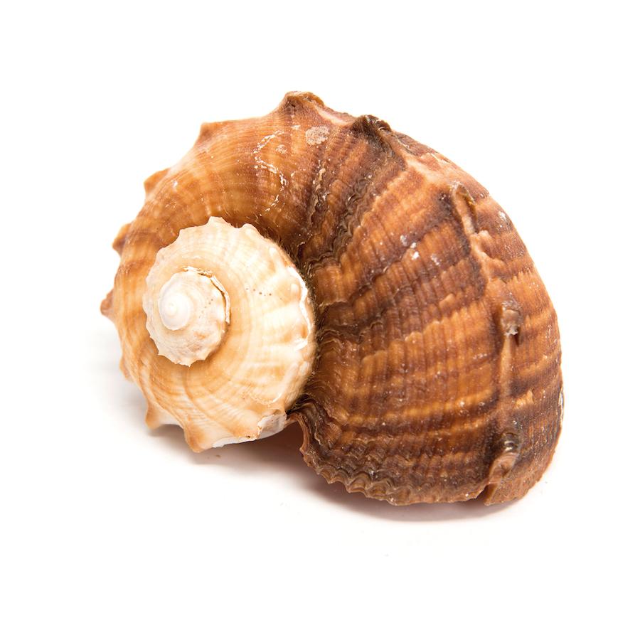 Buy Basket Of Sea Shells Tts
