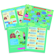 Breathing and Respiration Revision Activity Cards  medium