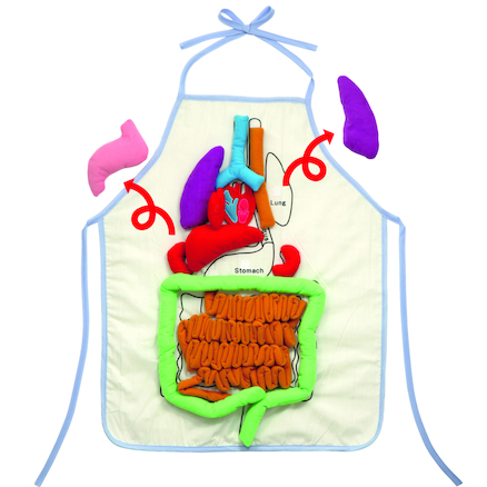 Human Anatomy Apron With Detachable Labels  large