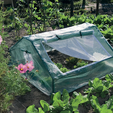Cold Frame Greenhouse  large