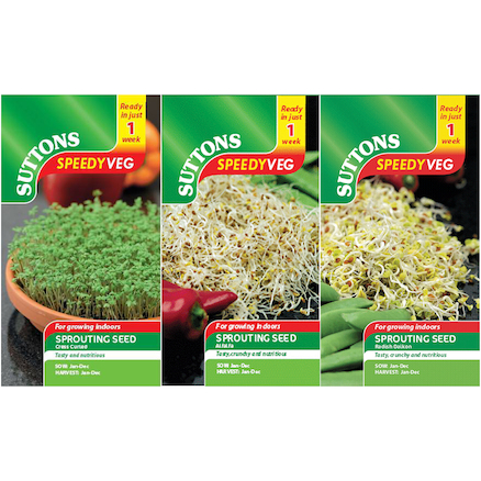 Seeds To Eat In 1 Week 22000pk  large