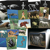 Whats Inside Animals? A4 Picture Cards  small