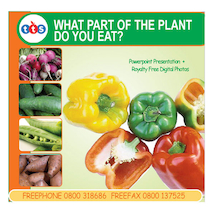 What Part of the Plant do you eat? CD Rom  medium