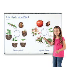 Giant Magnetic Plant Life Cycle Pieces  medium