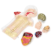 Nutrition and Health Experiments Class Kit  small