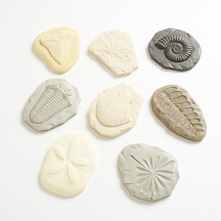 Fossil Discovery Stones 8pk  large