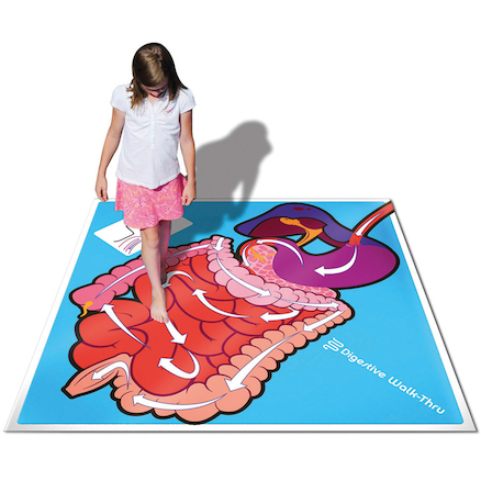 Digestive System Walk Through Activity Floor Mat  large