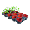 Plant Growing Pot  small