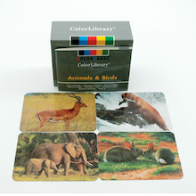 Animal and Birds A5 Image Cards 96pk  medium