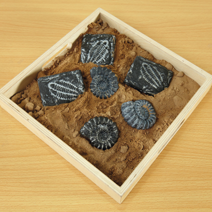 Sensory Fossil Replica Set 6pcs  large