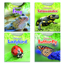 Animal Life Cycle Story Books 4pk  medium