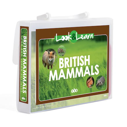 Look and Learn British Mammals  large