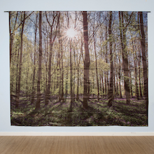 Immersive Environments Backdrops Woodland  medium