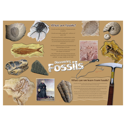 Discovering Fossils Poster  large