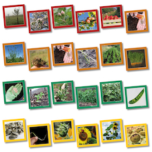 Plant Life Cycle Sequencing Cards  medium