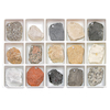 Fossils Collection 12pk  small