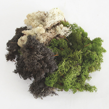 Mixed Moss Pack  medium