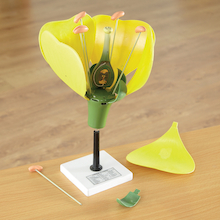 3D Flower Model With Detachable Parts  medium