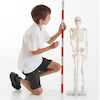 Replica Human Half Size Skeleton 85cm  small