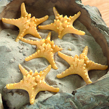 Natural Materials Starfish Set 5pcs  medium