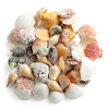 Assorted Sea Shells 800g  small