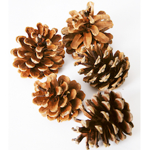 Natural Pine Cones  medium