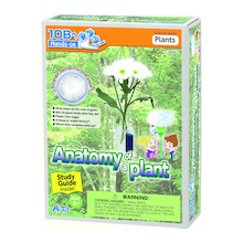 Anatomy Of A Plant Experiment Kit  medium