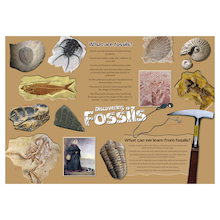 Discovering Fossils Poster  medium