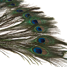 Peacock Feathers 10pk  medium