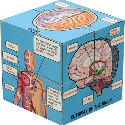Human Body and Anatomy Picture Cubes 6pk  large