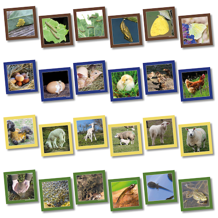 Animal Life Cycle Sequencing Cards  large