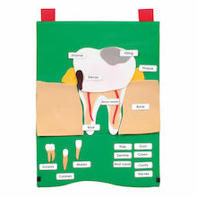 Tooth Health and Hygiene Wall Hanging  medium