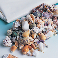 Assorted Sea Shells 800g  medium