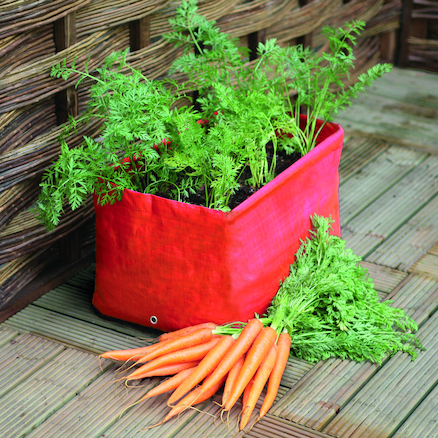 Carrot Patio Planter  large