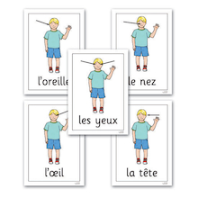 Parts of the Human Body French Flashcards A4 13pk  medium