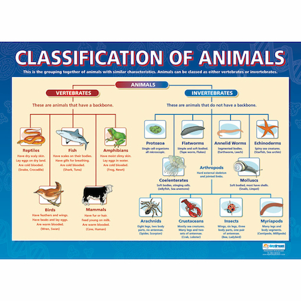 A1 Sized Animals Poster Set 3pk  large