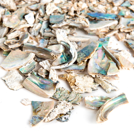 Abalone Shell Pieces 1kg  large