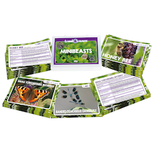 Look and Learn Minibeasts Fact Cards  medium
