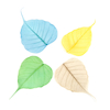Natural Bodhi Leaves Set  small