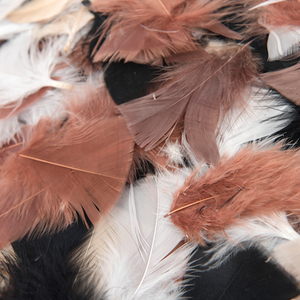 Assorted Feather Pack  large