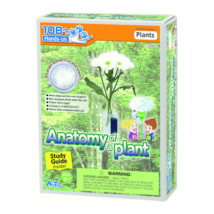 Anatomy Of A Plant Experiment Kit  large