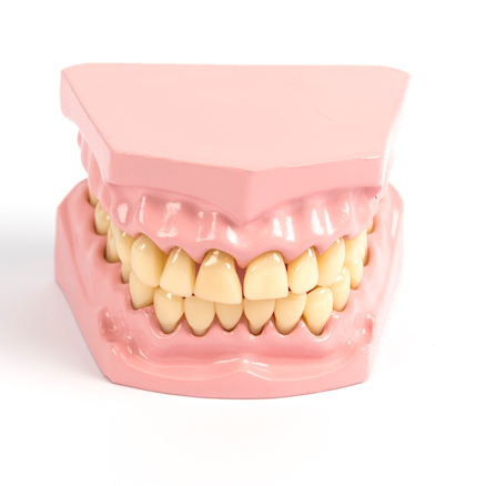 Teeth Dental Hygiene Model  large