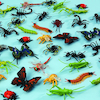 Minibeasts Pack  small