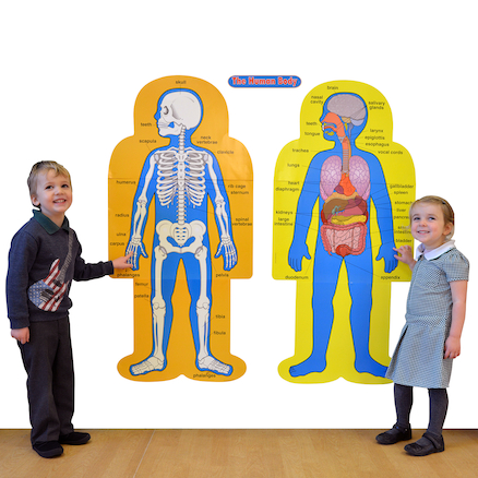 Child Size Human Poster Pack  large