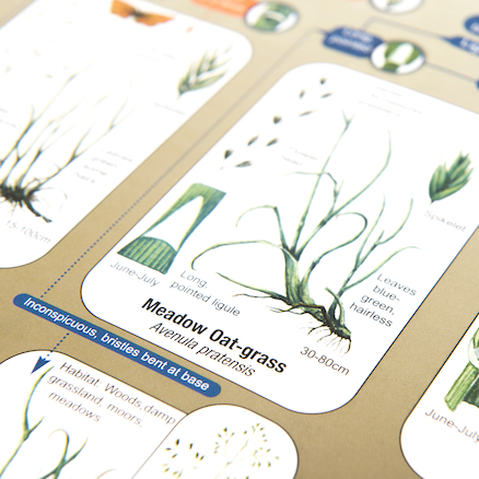 A3 Guide to Common Grasses  large